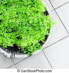 Green ornamental plant on gray tile floor. Home decor.