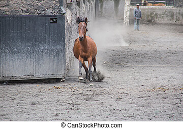 Horses running in the square