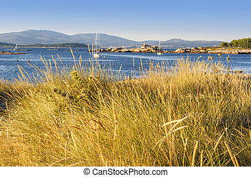 Dune vegetation on Arousa Island - Dune vegetation near the...
