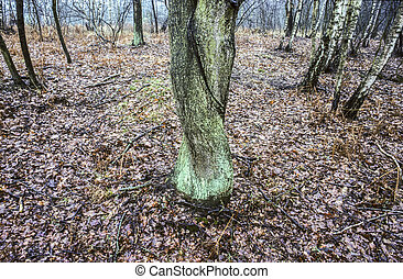 stem in forest looks like a shy woman with crossed legs -...