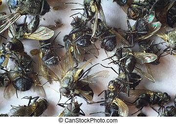 a lot of dead flies
