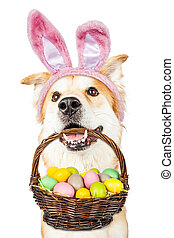 Cute Dog Holding Easter Basket Wearing Bunny Ears