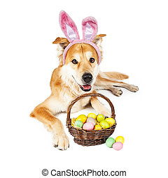 Cute Easter Bunny Golden Dog With Basket - Beautiful Golden...