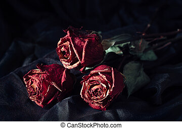 Three dry roses - Still life with three dry roses on black...