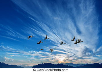 Birds flying against blue sunset in the background...