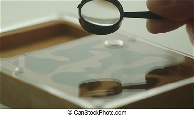 Studying the Ant Farm with Little Magnifier - Closeup shot...