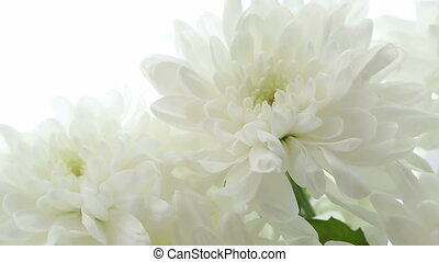 Beautiful bouquet of white chrysanthemums turns - Beautiful...