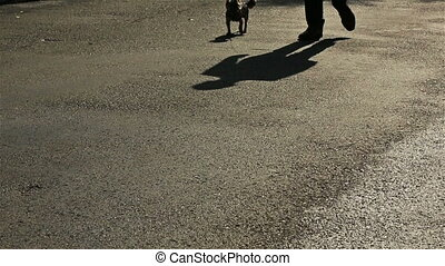 Silhouette of groom walking the dog on sunny alley in Montenegro, Budva