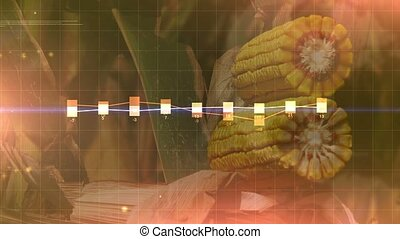 Corn crop harvest abstract