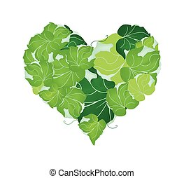Fresh Polyscias Leaves in A Heart Shape - Love Concept,...