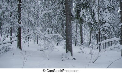 snowfall  - snowfall .Winter landscape.Winter beauty scene.
