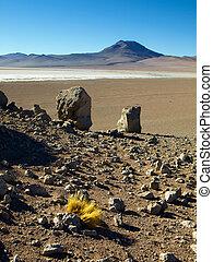 Landscape of bolivian Altiplano