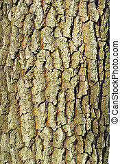 coarse background - Texture coarse background of old tree...