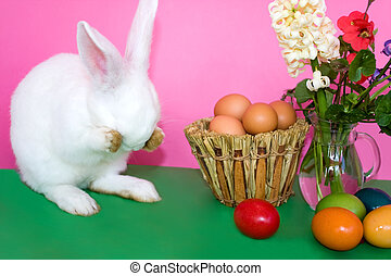 Easter Bunny - Playing Hide And Seek