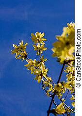 goldenrod - The Spring branch of yellow goldenrod and blue...