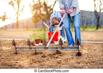 Senior woman and man plowing and planting seeds, garden