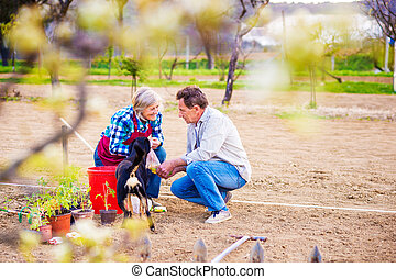 Senior woman and man in their garden planting seeds