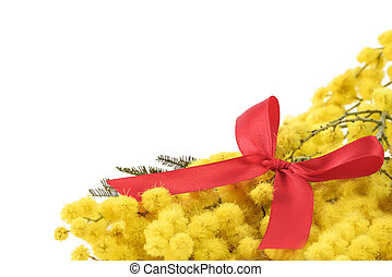 mimosa and red bow on white background