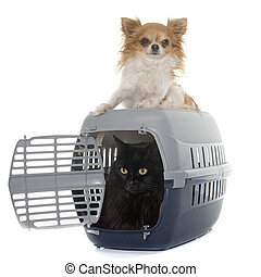cat in kennel and chihuahua
