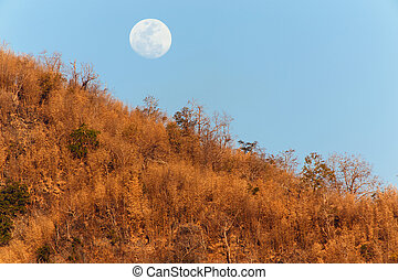 Moon rising over tropical dry bamboo forest in the...