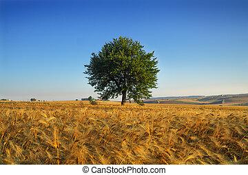 Summer: lone tree in a field.