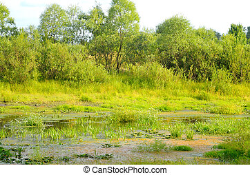 Swamp at sunny day - View of the swamp on a sunny summer...