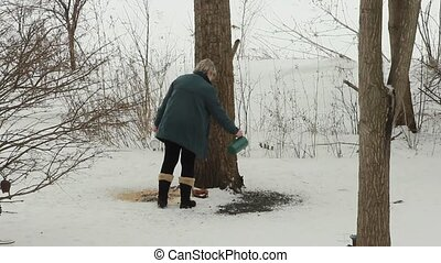 Spreading bird seed - An animal lover spreads seed on the...