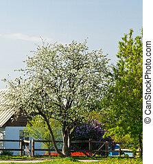 farmhouse among flowering trees on sunny day