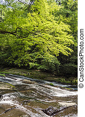 River flowing rock mass under painted maple tree in vertical...