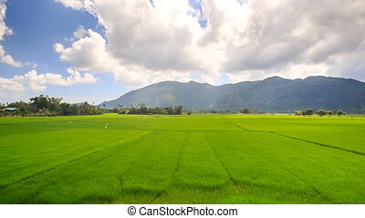 Closeup Camera Moves along Rice Field to Village - closeup...