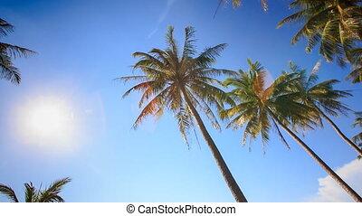 Camera Circles Palms from Downward Bright Sun Sky - camera...