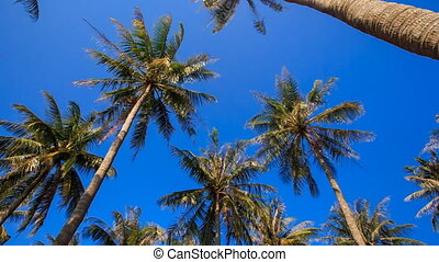 Camera Circles Palms from Downward Sky Bright Sunlight -...