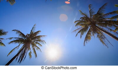 Camera Moves across Palms from Downward Bright Sun Blue Sky...