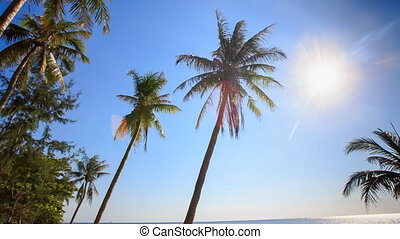 Camera Moves along Palms from Downward Bright Sun Blue Sky -...