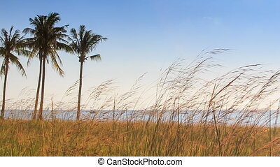 Windy Thin High Grass Palms on Beach Blue Sky Azure Sea -...