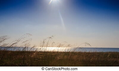 Camera Approaches Sun Sunlight Reflection in Sea Grass on...