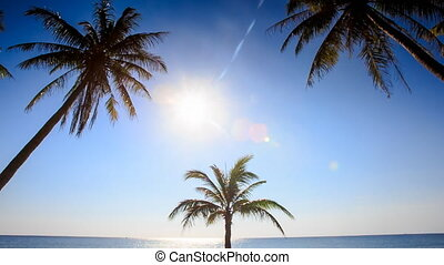 Camera Approaches Palm from Downward Bright Sun Blue Sky -...