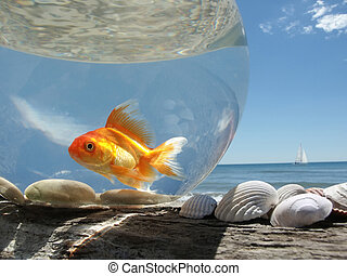 Goldfish on Holiday - A Goldfish in its aquarium on the...