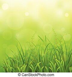 Green grass natural background - Spring green grass natural...