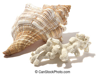 spiral shell and white coral isolated