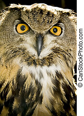 Portrait of wise owl with mystic yellow eyes