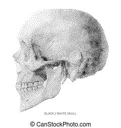 Skull 01 - Stylized Bony skeleton of the face and the side...