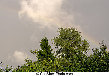 Trees and Stormy Sky - Green tree tops under spring stormy...