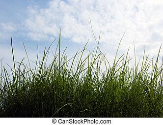 Closeup growing grass