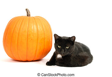 Pumpkin and a Black Cat - Black cat sitting beside a big...