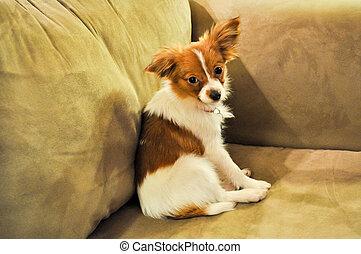 Puppy Ears