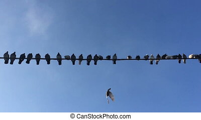 Pigeons sit on the wire against the blue sky and fly away.