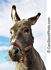 donkey with red  collar