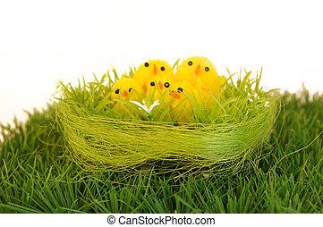你, 小雞, 設計, 被隔离, 復活節