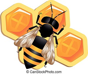 Honeybee - a colorful illustration of a honey bee on a...